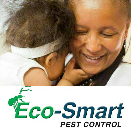 Rat and Mice Control – Pest Control
