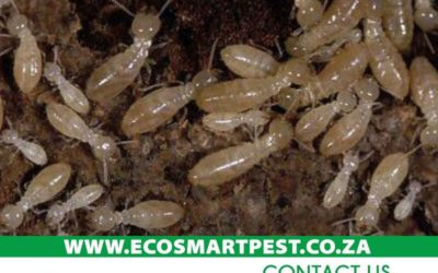 What happens when termites invade your house?