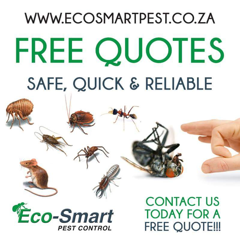 Natural Pest Control – Using Essential Oils