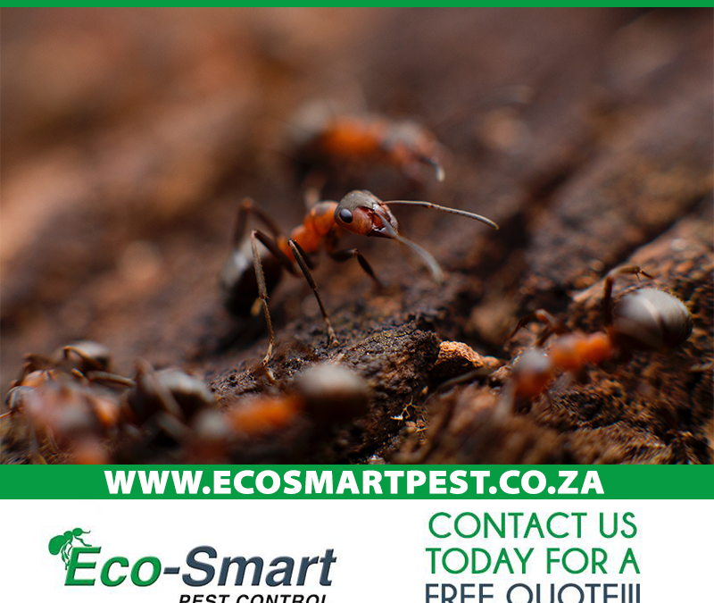 Eco-friendly Pest Control
