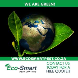 Eco-smart Pest control environmentally friendly