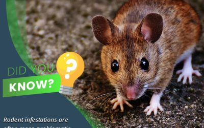 Rodents- Did you know?